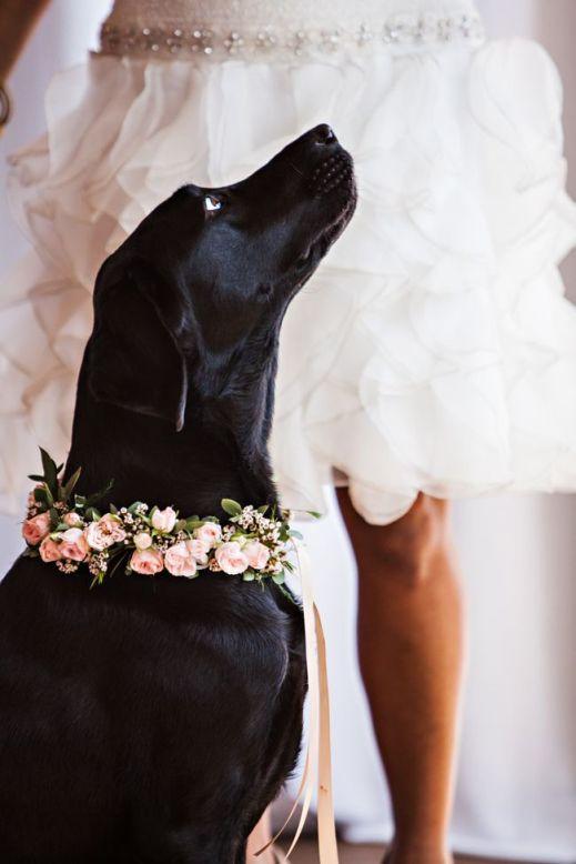 dog wedding 13
