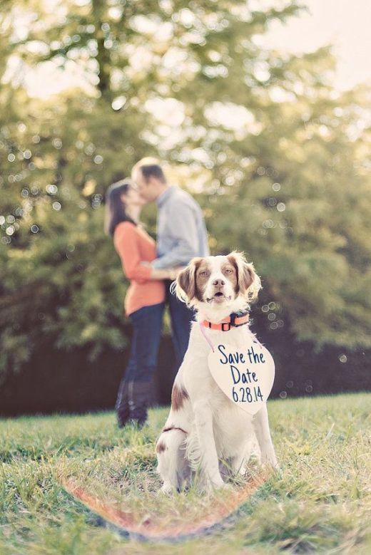 dog wedding 14