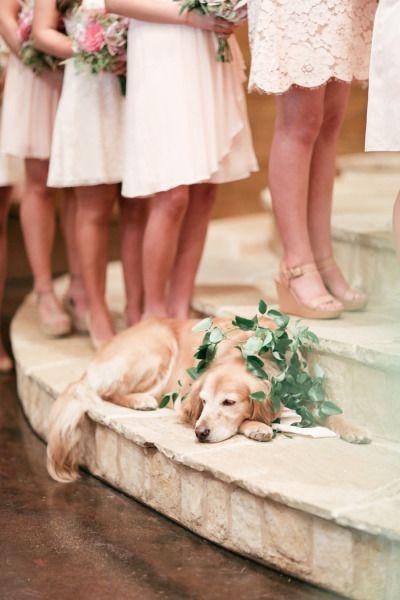 dog wedding 16