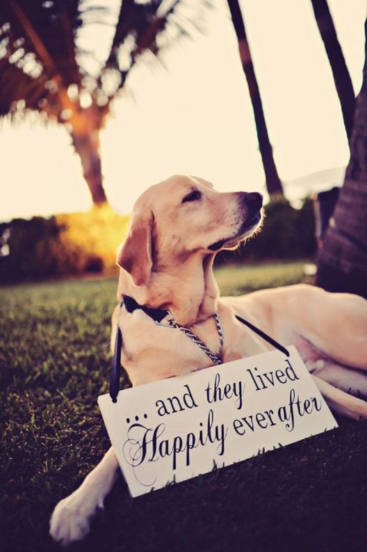 dog wedding 17