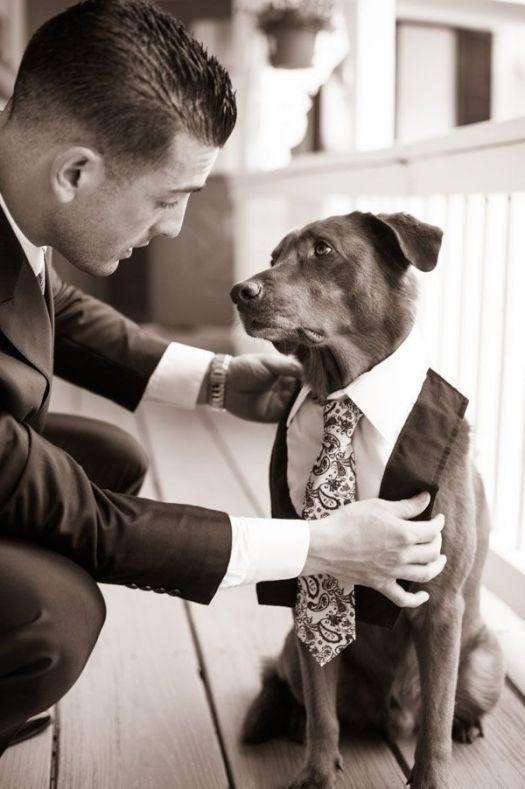 dog wedding 2
