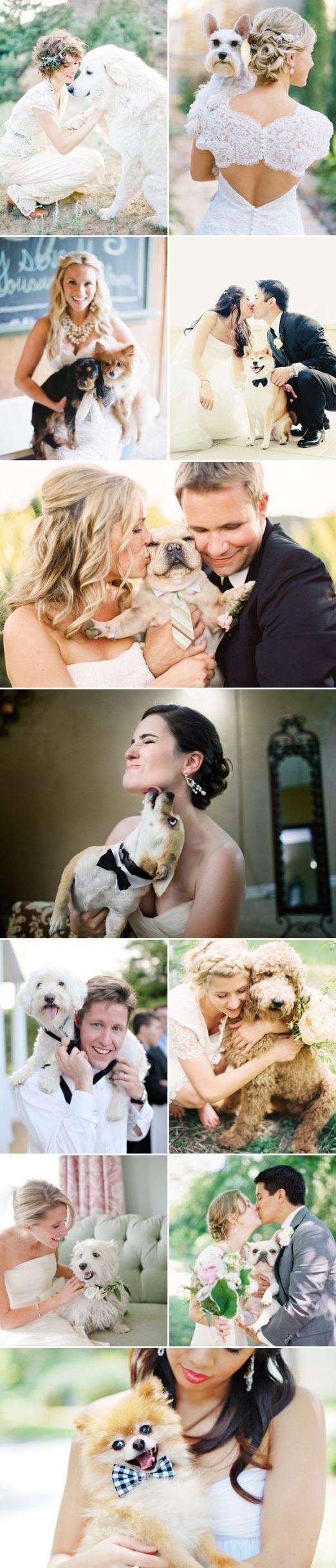 dog wedding 7